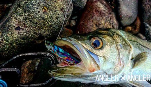 【初心者講座】シーバスフィッシングの始め方!釣り方からロッドやリールの選び方まで完全ガイド