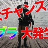 【釣行記】ヒラメ狙いのはずがナブラ発生で釣れたのはサゴシ!