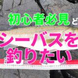 【初心者講座】シーバスを意地でも釣る方法~Time is Fish編~